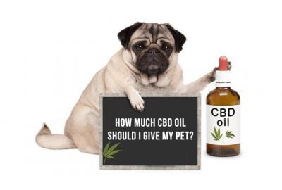 How much CBD should I give my pet?
